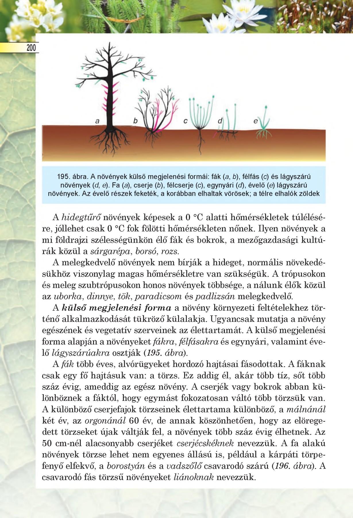mi a mezei parazita károsodása