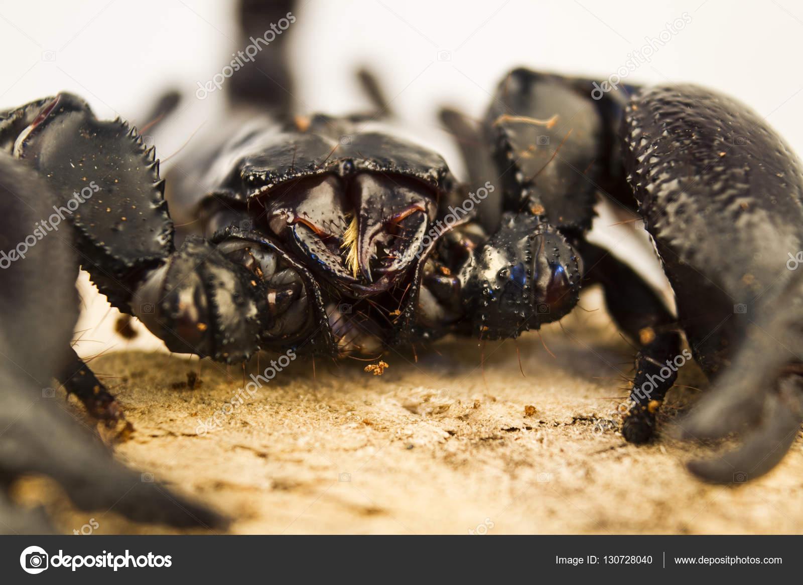 a skorpiónak vannak parazitái