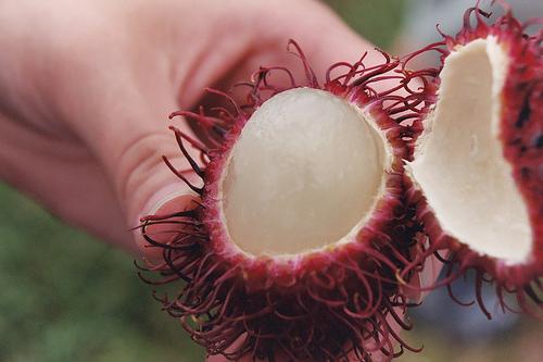 thaiföldi bőrparaziták