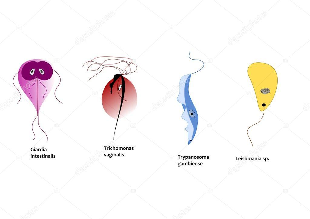 parazita leishmania savanyú lehelet hogyan lehet megszabadulni
