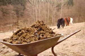 trágya fertőtlenítése helmintákból