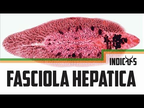 Fascioliasis diagnosztizálása és megelőzése. OTSZ Online - Egaten trópusi májmételyfertőzés ellen