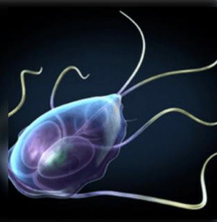 paraziták a vastagbélben tünetek kezelése a pinwormusok és a roundworms együtt élnek