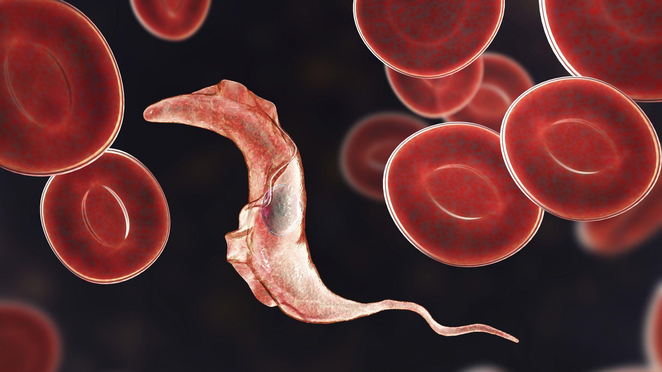 paraziták rendezték ezt pinworm testüreg