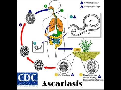 Ascaris parazita emberi széles spektrumú féreghajtó szer ember számára