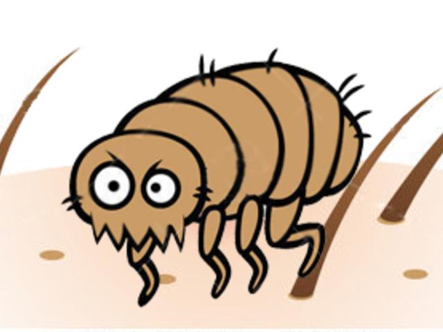 Bőrparaziták kezelése - Allergiás reakciók