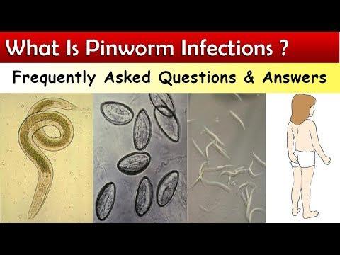 pinworms méretek és tól