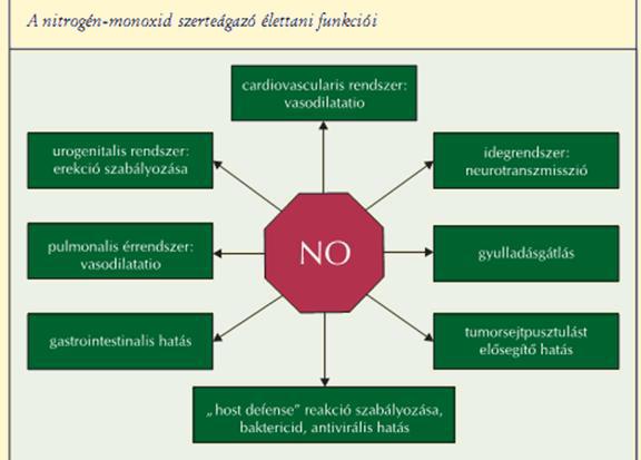 gyógyszerek a nitrogén- oxid növelésére a szervezetben a rossz lehelet tünete