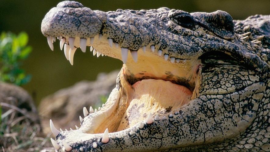 krokodil paraziták pinworm életciklus rövid