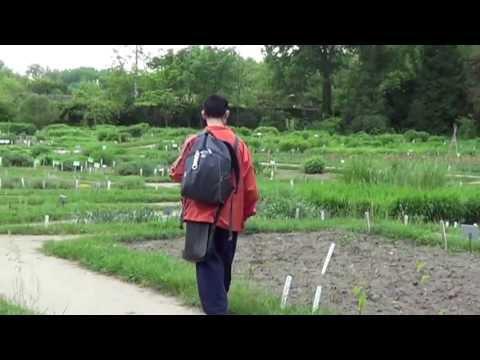 szarvasmarha galandféreg- fertőzés módszerei