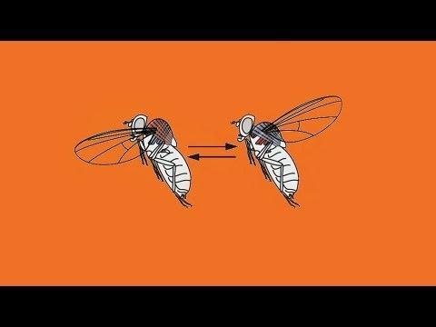 rovar paraziták példák hogyan lehet a parazitákat gyógynövényekkel kiűzni