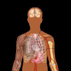 paraziták a tüdőben átterjedt állapotban