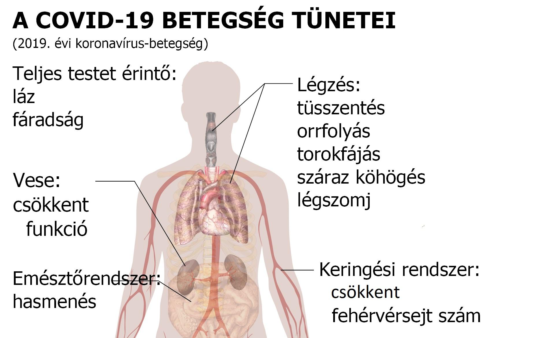 parazita az emberi test tüneteiben