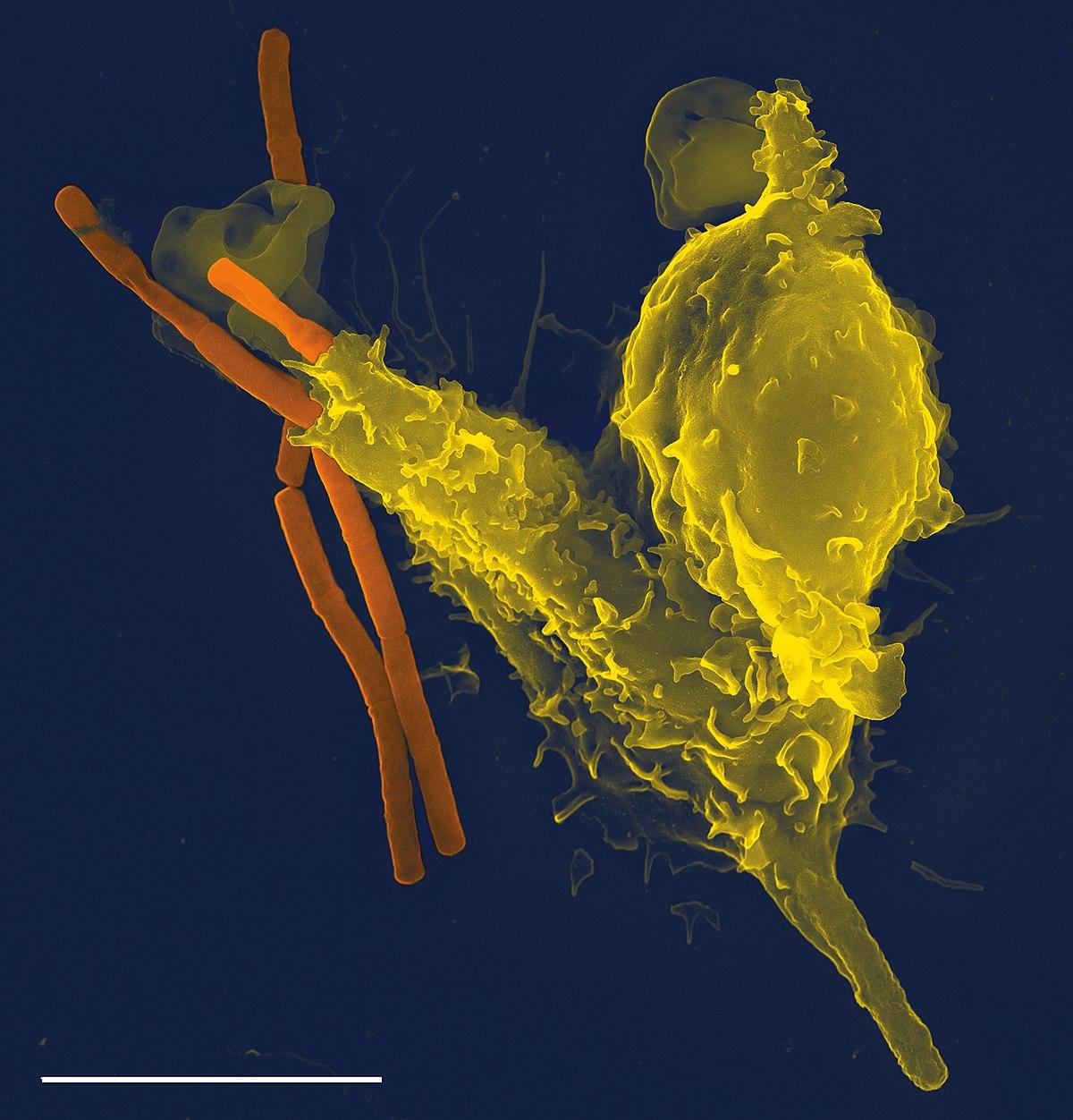 mi jó a parazita életében paraziták az emberi ágyékban