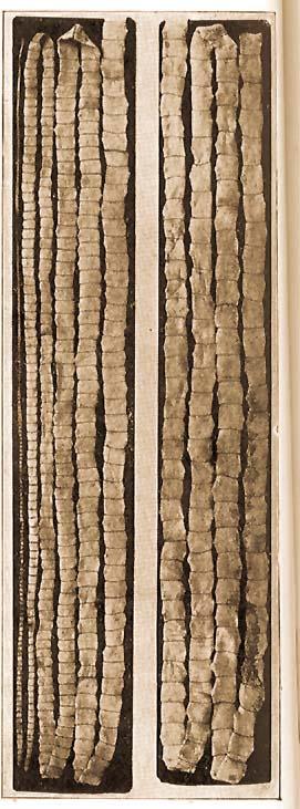 pinworm melyik féreg kerek vagy lapos fórum tisztítása a parazitáktól