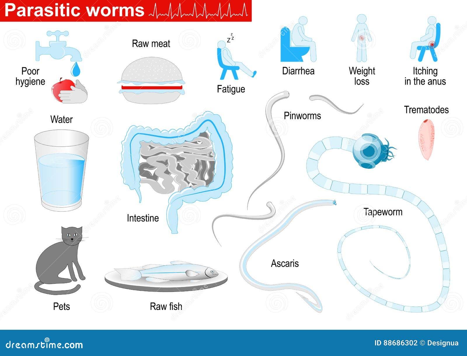 paraziták a test kezelésében paraziták ózonterápiája