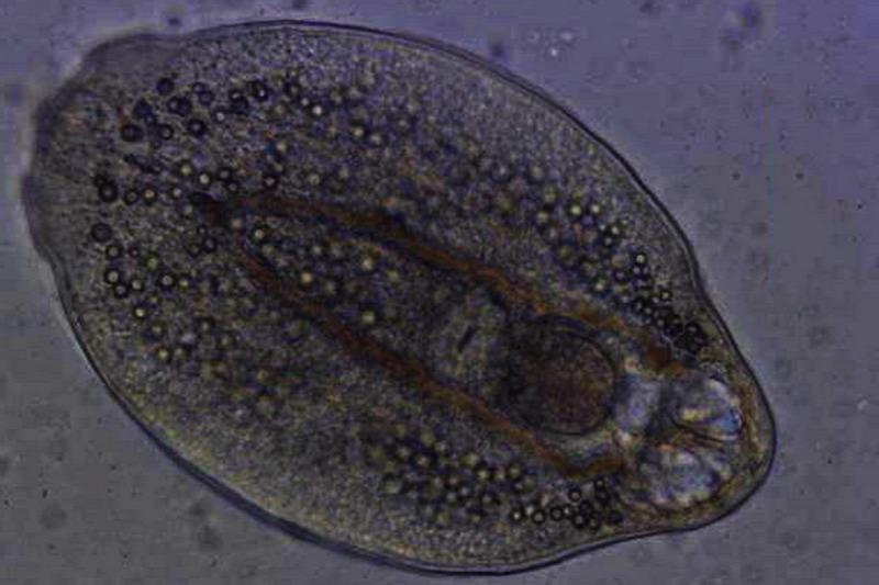 paraziták a bőr alatt a tojásokon kerek paraziták az emberi testben