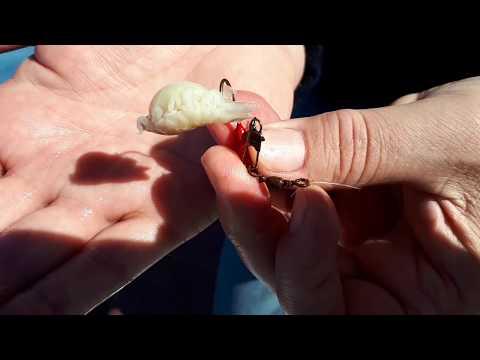 pinworm fertőzés tünetei parazita képviselő