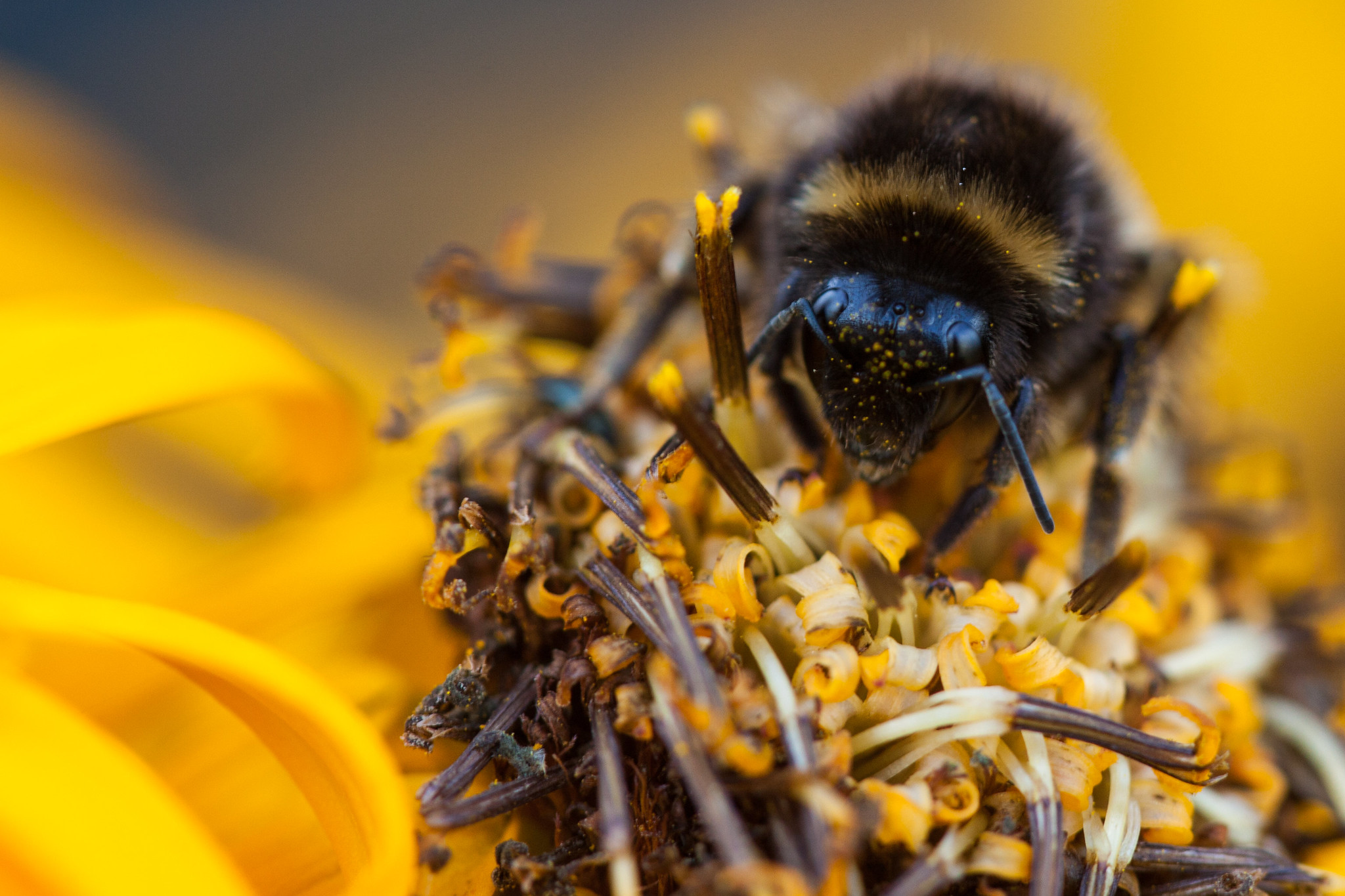méh paraziták