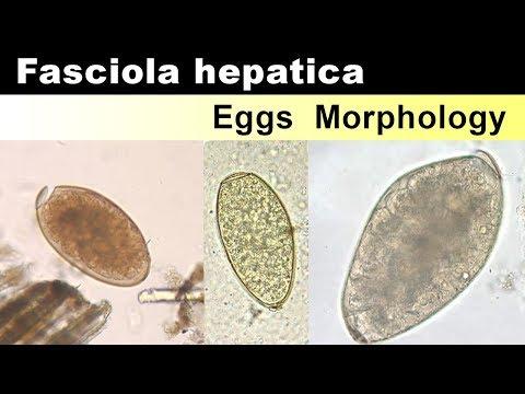 mi a helminthiasis hogyan kell kezelni a felnttekben széles spektrumú féreghajtó szer ember számára