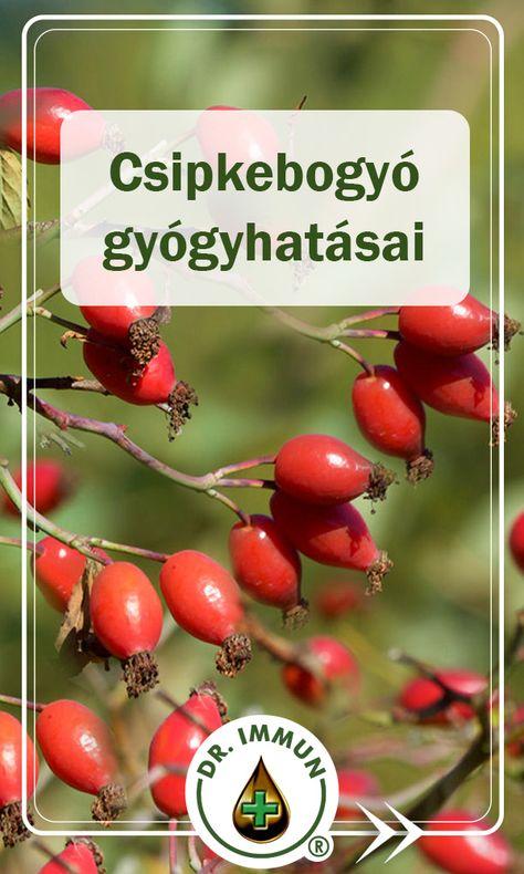 Növények/Natúr gyógytea/Csipkebogyó Csipkebogyó paraziták