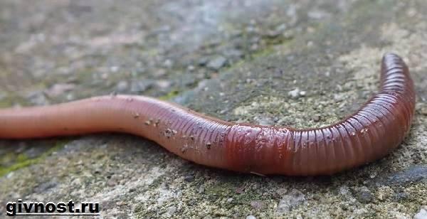 pinworm tünetei és jelei van- e száj parazitákkal