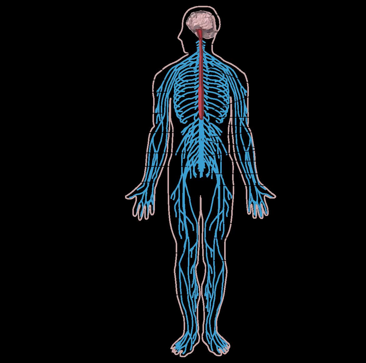 hogyan lehet kilábalni az emberi test parazitáiból