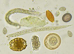 paraziták mágneses tere üzenet a féreg