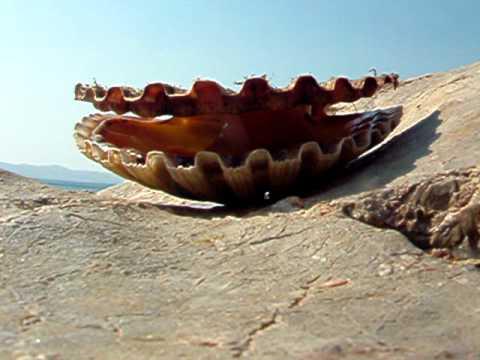 kagyló a test paraziták egészségügyi szabályok az enterobiasis megelőzése