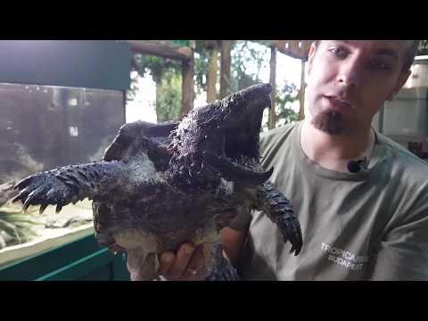 krokodil paraziták pinworm popsi viszketés