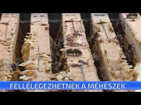 monoxén parazita az