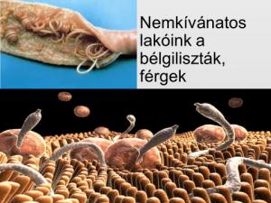 parazita megtévesztés hogyan lehet elűzni a férgeket az emberektől