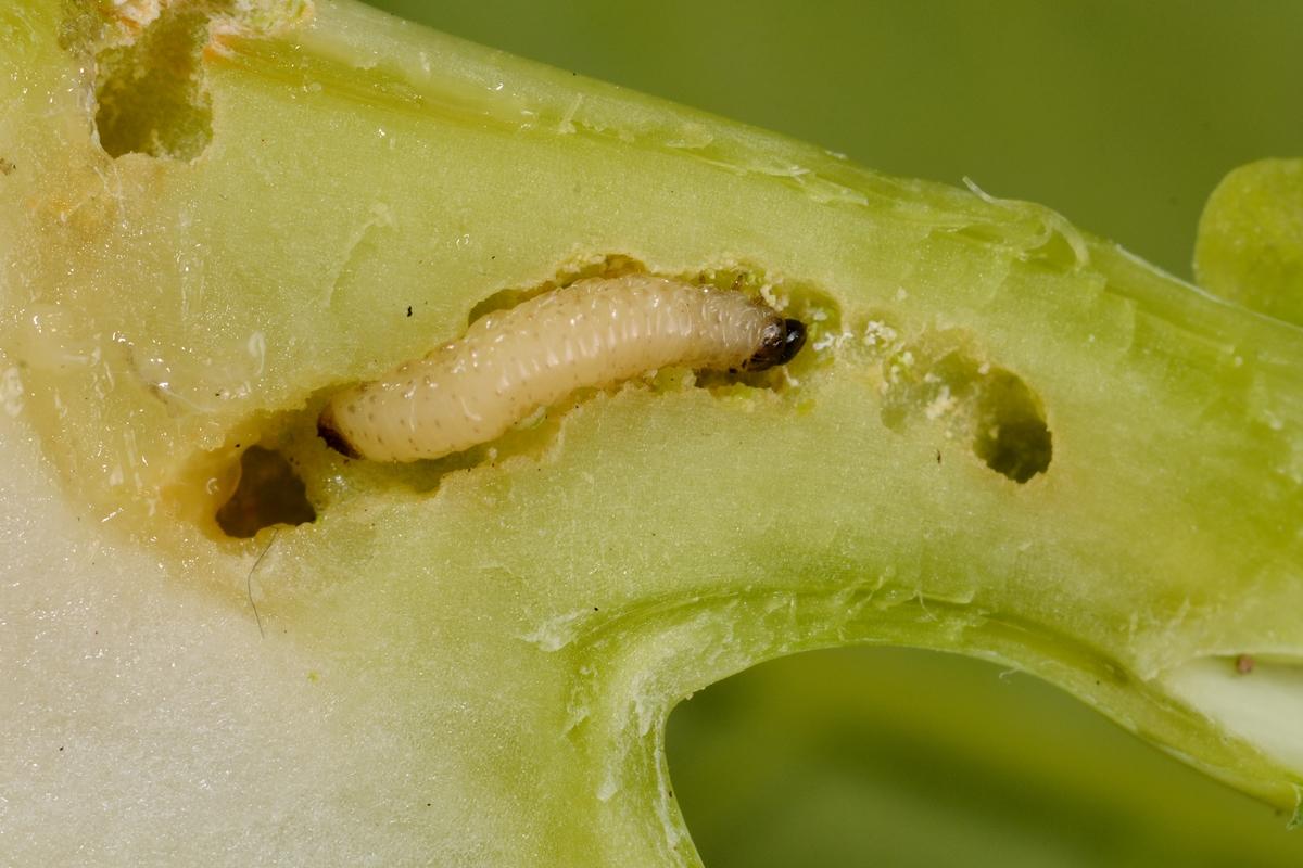 paraziták a darázsokon és rossz lehelet a forgalmi dugóktól