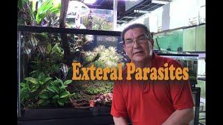 Discus kopoltyú paraziták