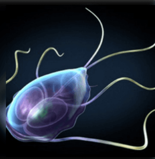 parazitaellenes gyógyszer széles pszichoszomatika rossz lehelet