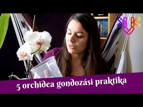 paraziták az orgonákban kalla liliom parazitákkal