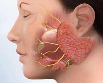 10 fő keserűség oka a szájban, mit kell tennie? - Fekély