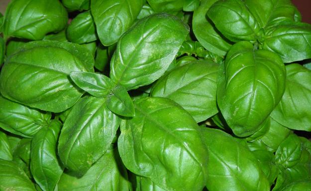 parazitákból származó gyógynövények bazsalikom