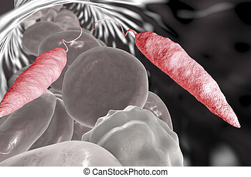 parazita leishmania mikor jobb a paraziták vizsgálata