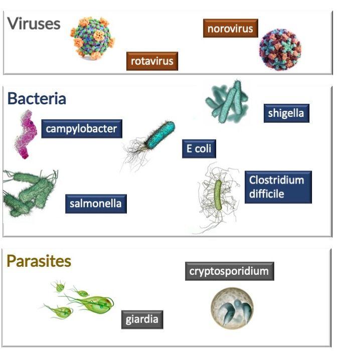 paraziták kezelése borssal