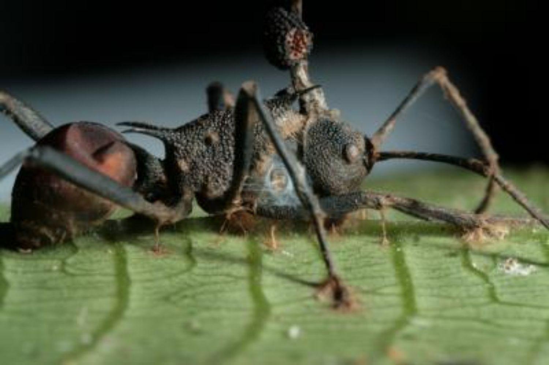 parazita visszatért a kerekférgek önmagukból jönnek ki