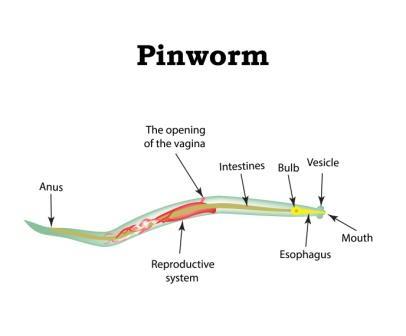 milyen kárt okoz a paraziták a szervezetben